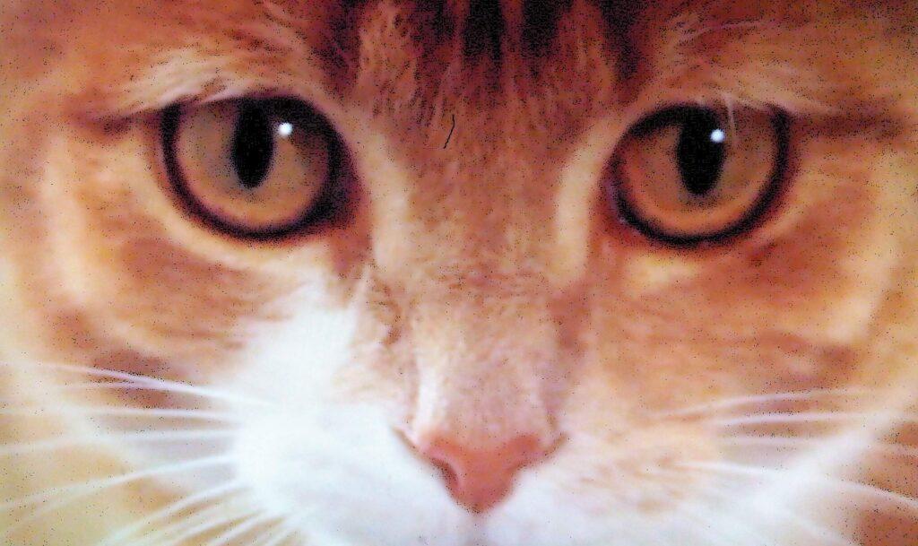 01 ginger cat