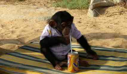 Monkey Olives?