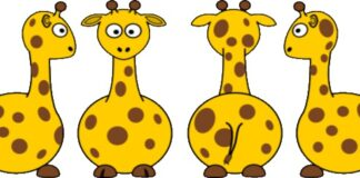 Giraffe, random
