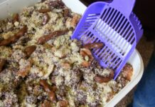 Four Worst Places To Serve Kitty Litter Cake