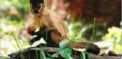 Monkey Acronyms