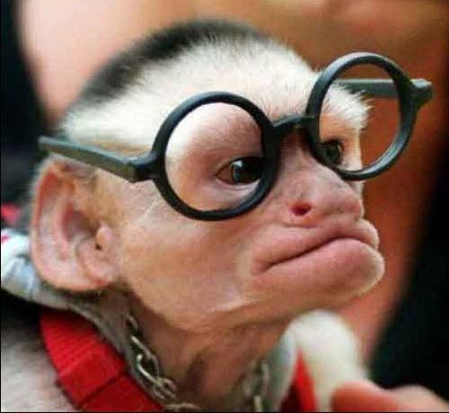 Monkey Photos and Glasses