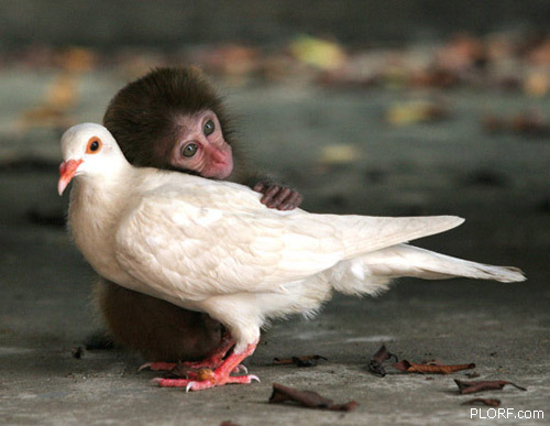 Monkey Photos and Dove
