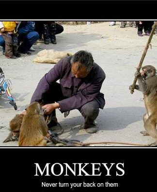 Monkey Photos