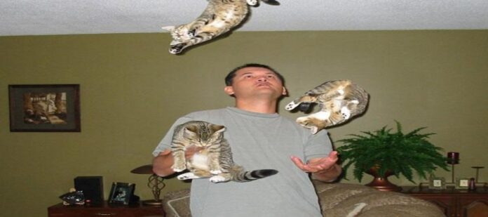 Cat Juggling - Animal Juggling
