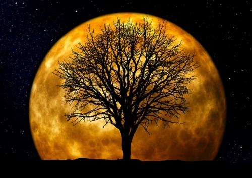 tree-66464_640