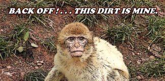 Monkey Miner