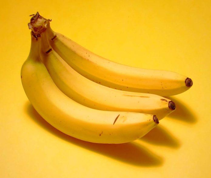 bananas extinct, banana alternative, cavendish banana, sweet banana, red banana, plantains, banana parasite, monkey pickles, funny, community