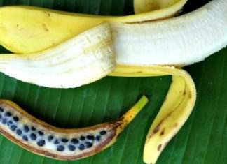 Banana Fruit, Banana Tree, Banana Seeds, Banana Anatomy, Banana Plant,