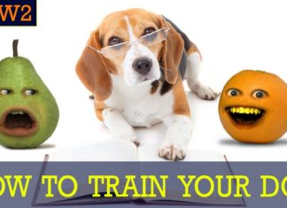 How to Train Your Dog! Detach