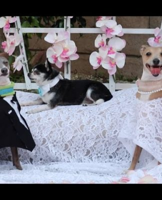 My Dogs' Wedding