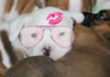 Which adorable puppy are you, puppies, personality test, fun quiz