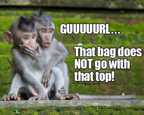 10 Funny Monkey Memes For Your Face