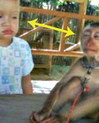 Baby Monkey Memes, Monkeys, Cute Monkeys, Baby Monkeys, Baby Animals, Memes