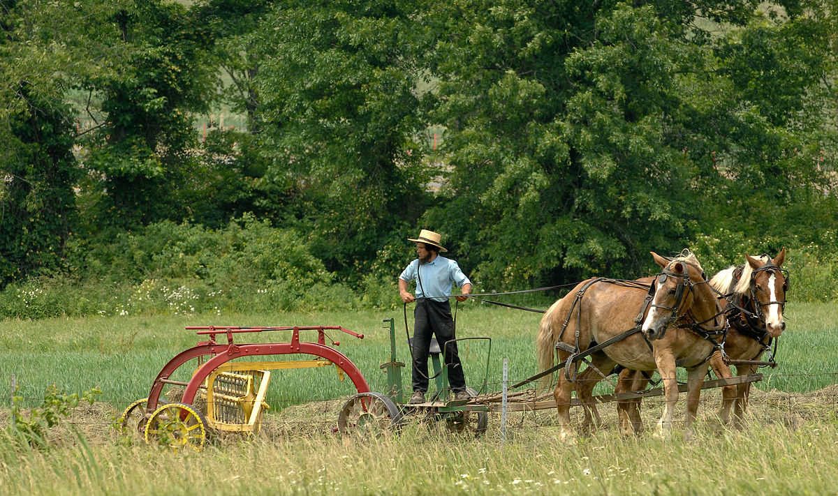 List of Amish and their descendants