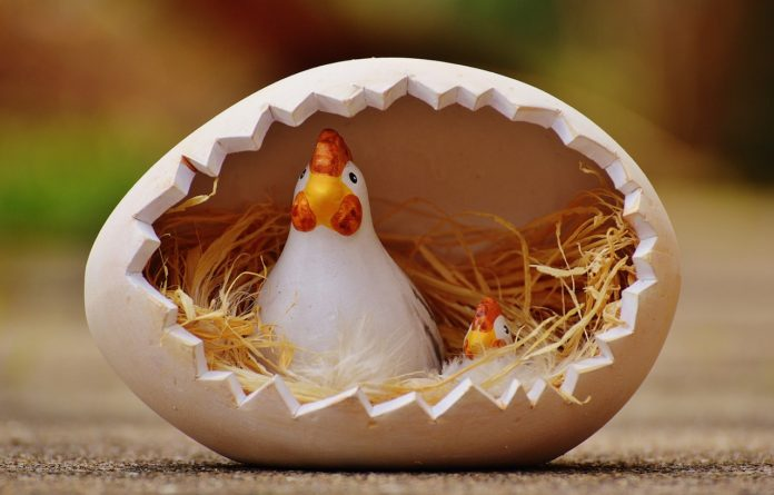 Chicken Jokes For Adults: What A Coincidence! Funny Joke Of The Day