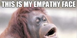 Empathy Monkey Meme, Best Monkey Memes, Funny Monkey