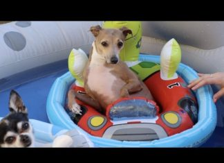 pool party, dogs in pool, summer pool