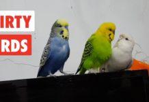 flirty birds